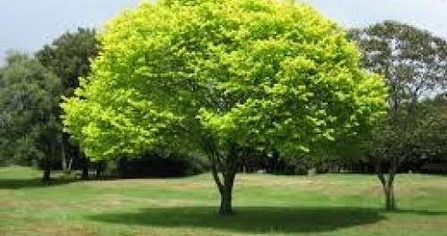 Bomen In Tuin : Hoe verzorg je je bomen de praktijk acadamie